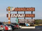 Walt disney world orlando (xv): everglades regreso casa