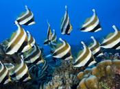 Buceo Polinesia