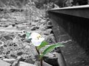 Superar dificultades aumentar resiliencia