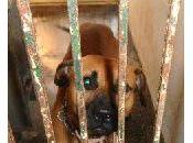 URGENTE: PERRERA SEVILLA, pitbull macho chip, localizan dueño.