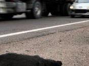 Policía Local deja morir perra atropellada carretera.