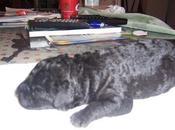 Cachorro tirado busca adopción, único superviviente.
