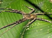 Sabias Veneno araña provoca horas erección. próximo viagra? NOTICIAS CURIOSAS