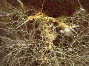 Biorremediación. Hongos acumulan cobre.