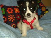 CACHORRITO MESES cruce terrier, adopción. (Caceres)