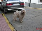 Precioso perro aguas abandonado provincia Huelva.