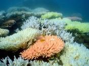 corales podrían capaces hacer frente altas temperaturas agua