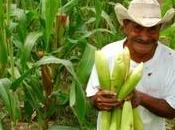 Progresos contra hambre Guatemala? pero...