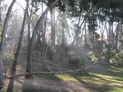 Parques Zaragoza (I).