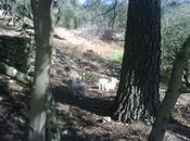 Cachorritos, totalmente blancos ojos azules, abandonados Sierra Cazorla (Jaén)