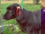Historias perros Perritos adopción