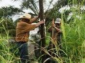 Congreso EE.UU. envía carta Presidente colombiano pidiendo protección para líderes restitución tierras.