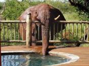 Elefante desaparece agua jacuzzi