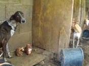 Doce perros caza viven hacinados agua finca Roque