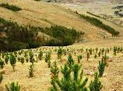 ¿qué reforestación?