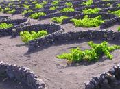 vino volcanes