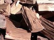 Promueven leña seca región Lagos