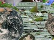 ¿Qué biodiversidad?