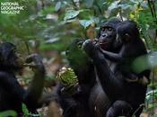 tipo chimpancé amor sexo para sobrevivir