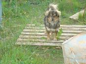 Urgente!! peludo kilos años, pegar demás perros. (sevilla)