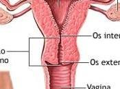 ¿Puedo quedar embarazada solo ovario?