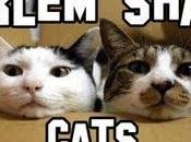 Harlem Shake Cats!