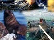 ¿Qué Ocurre Animales Marinos Cuando Lanzamos Basura Océano