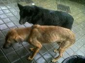 calle, perritos estado riesgo muerte físico. urgente. (huelva)