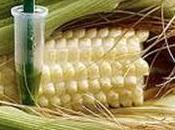 Alertan sobre peligros alimentos transgénicos para humanos