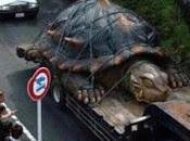 Amazonas: encuentran tortuga grande mundo