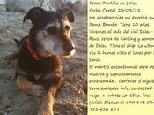 Bamba, perra perdida, tiene años. (Cataluña)