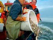 Potenciales impactos para aves marinas reforma descartes