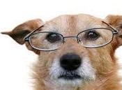 gran mentira proteína perros ancianos