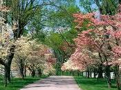 Bienvenida Primavera. Ayuda demás
