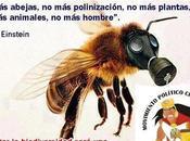 abejas, transgénicos desaparición vida tierra