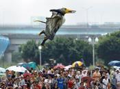 hombre pterodáctilo quería volar