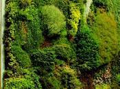Aprender construir jardín vertical verdad