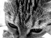 Cuestiones alimentación comercial para gatos