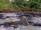 Caso British Petroleum (BP) Contaminación Golfo México único. Chevron-Texaco Selva Amazónica Ecuatoriana