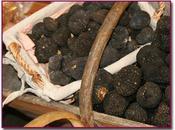 trufas, diamante negro cocina Arancha Herrero
