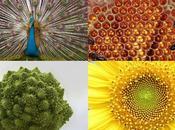 Extraordinarios ejemplos simetría Naturaleza, explicados