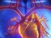 Rejuvenecer corazón posible