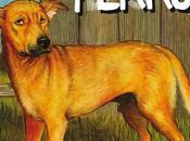 Ediciones Cúpula presenta Buen perro, Graham Chaffee