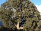 árbol grande Andalucía descansa Serón