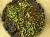 Resucitan plantas enterradas bajo hielo durante años