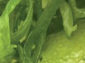Propiedades algas: bondades nutricionales terapeúticas