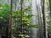Claves para Salvar Bosques