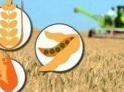 Maíz trigo suben Chicago, soja baja datos USDA