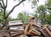 Deforestación, negociado inmobiliario, Monsanto