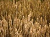 Agricultores argentinos declaran huelga comercial cinco días